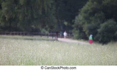 grassy field and joggers - joggers and strollers on a path...