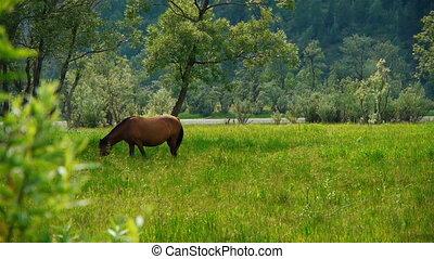 Horse 1 - Horse