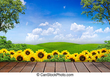 Views of sunflower and green meadow in blue sky