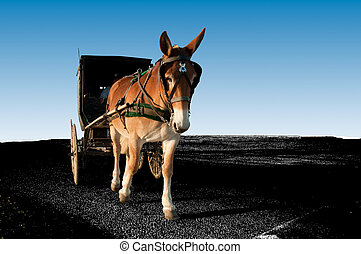 Mule and Buggy