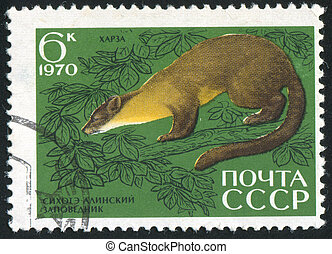 Pine marten - RUSSIA - CIRCA 1970: stamp printed by Russia,...