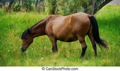 Horse 2 - Horse