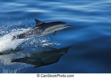 Common Reflections - A Common dolphin reflecting in the...