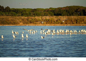seagulls at nature park - View of the Ria Formosa natural...