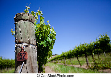 Fresh Vines - Focus on Vine Post with row of vines in the...