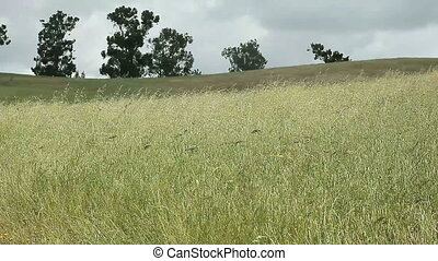 grassy field - field of grasses with trees in the background