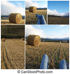 Collage agriculture