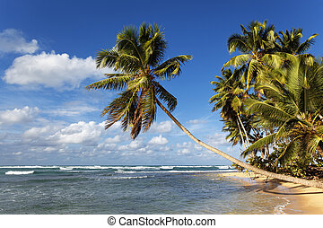 beautiful caribbean beach with palm trees and blue sky