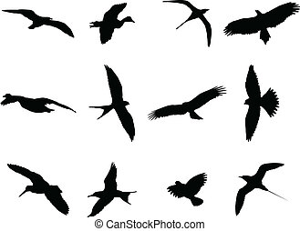 Birds silhouette collection - vector