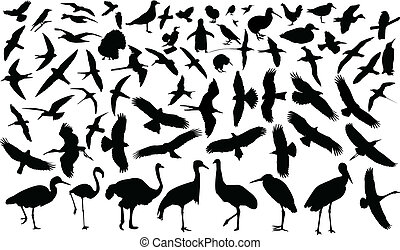 Collection of birds silhouette - vector
