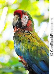 México,  zoo,  Chetumal