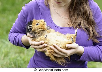 Happy abyssinian guinea pig Girl holding her favourite...