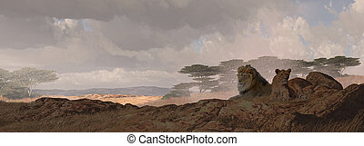 Two African Lions - A African landscape scene of two lions...