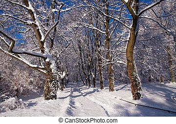 Snowy Lazienki park,  Warsaw