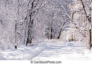 Snowy Warsaw park