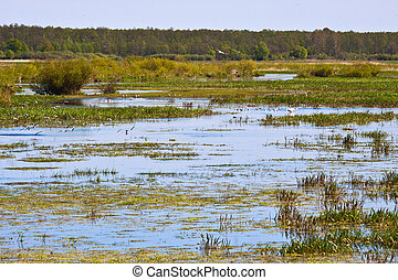 Biebrza swamps national reserve