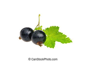black currant isolated 04