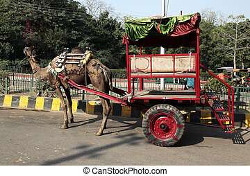 Camel Taxi Agra - a two wheels camel taxi for transportation...