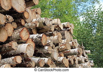 Pile of birch logs - Detail of birch logs piled up in forest...