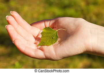 Hand holding a small leaf with water drops on it