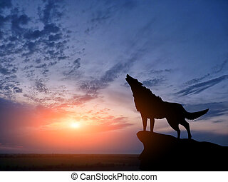 two wolves - wolve on a mountain top