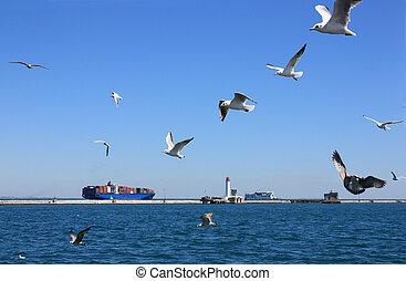seagulls over sea - seagulls over black sea