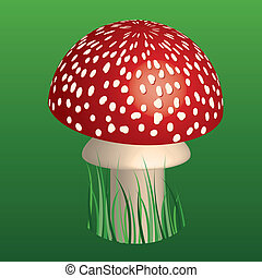 fly-agaric - red toadstool in green grass