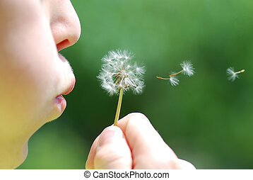 child and blowball - child and fresh blowball blow during...