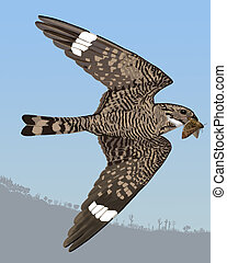 Lesser Nighthawk catching moth - Lesser Nighthawk...