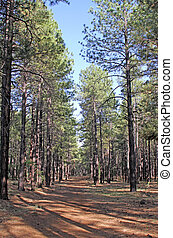 Ponderosa Pine Woodland Trail - Hiking trail in Ponderosa...