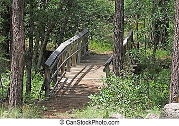 Forest Bridge - Bridge over creek in pine forest