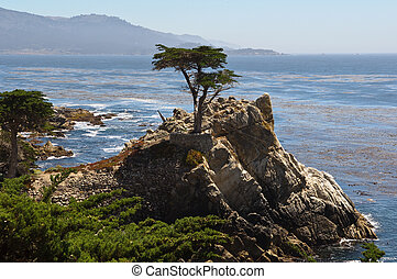Lone Cypress Tree Monterey California