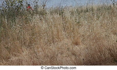 field of grasses with bicyclists