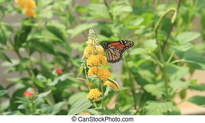 Butterfly on yellow plant two