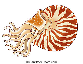 nautilus cartoon illustration for kids
