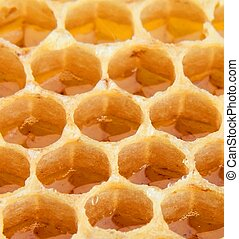 Honeycomb close up