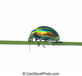 Cheerful iridescent bug on a white background - Cheerful...