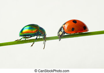 Cheerful iridescent bugs on a blade on a white background