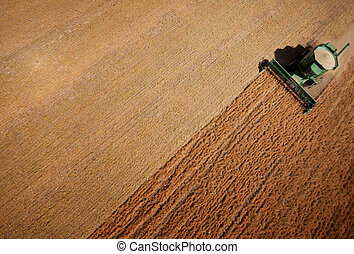 Harvest - Abstract view of a combine harvesting lentils in a...