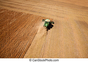 Lentil Harvest Aerial - A combine harvesting a field of...