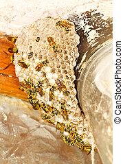 beehive - a beehive with bees