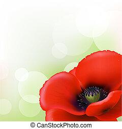Red Poppy, Vector Illustration