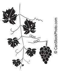 grape vine and cluster of grapes - vector grape vine and...