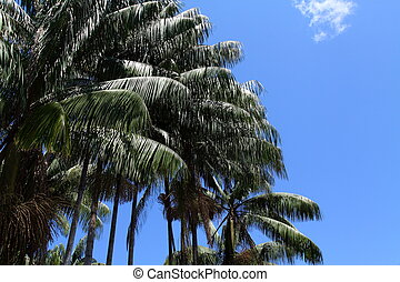 Green Palm Forest over blue sky