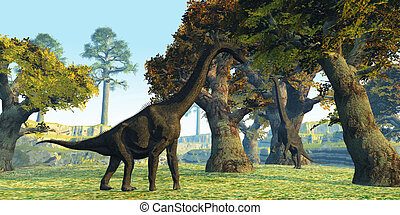 Brachiosaurus - Two Brachiosaurus dinosaurs walk among large...
