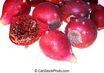 Prickly pear cactus red fruits  Opuntia ficus-indica