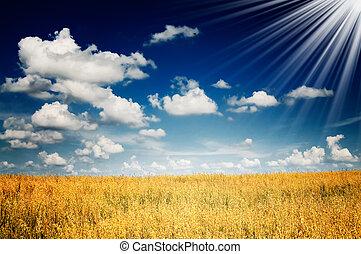 Nice oats field.