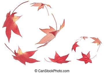 otoño, hojas, Caer