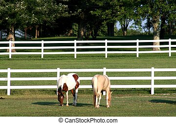 Grazing horses with white fence