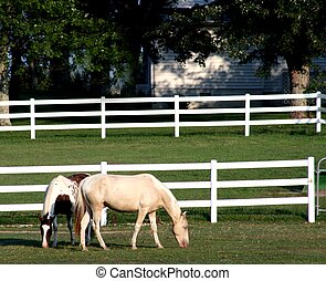 Two horses in corral